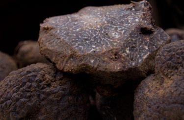 Truffes-aude-grand-carcassonne