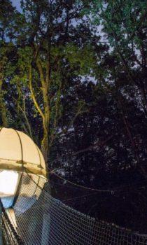 cocoon-tree-montolieu-la-forge