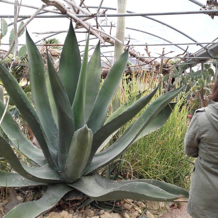 Cactuseraie-montolieu
