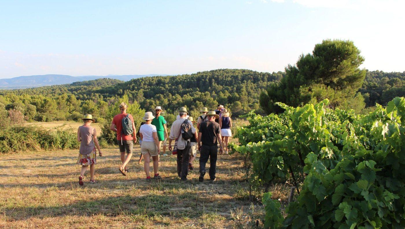 The vineyard walks