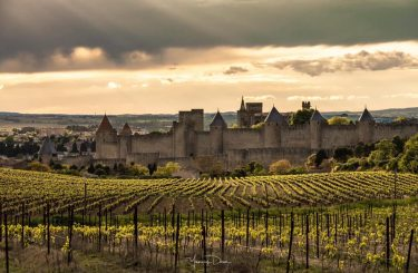 cite-carcassonne-vigne