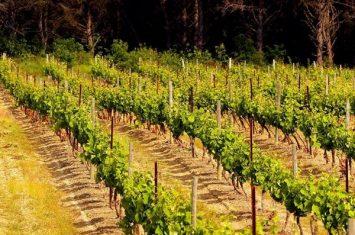 Aragon sentier des vignes