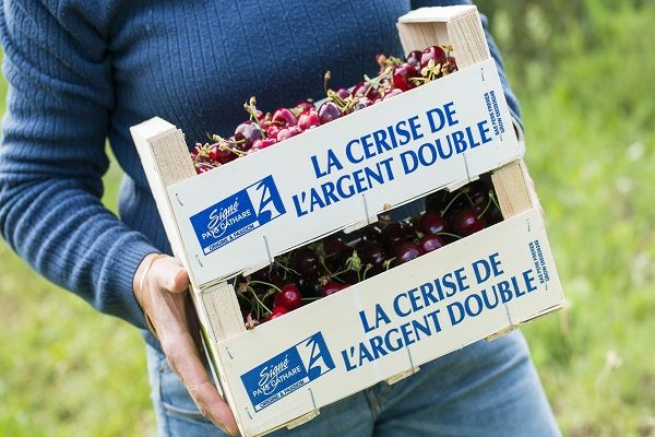 Cerises-pays-cathare (1)