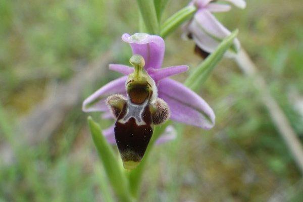 Junglo botanique 3 Montclar